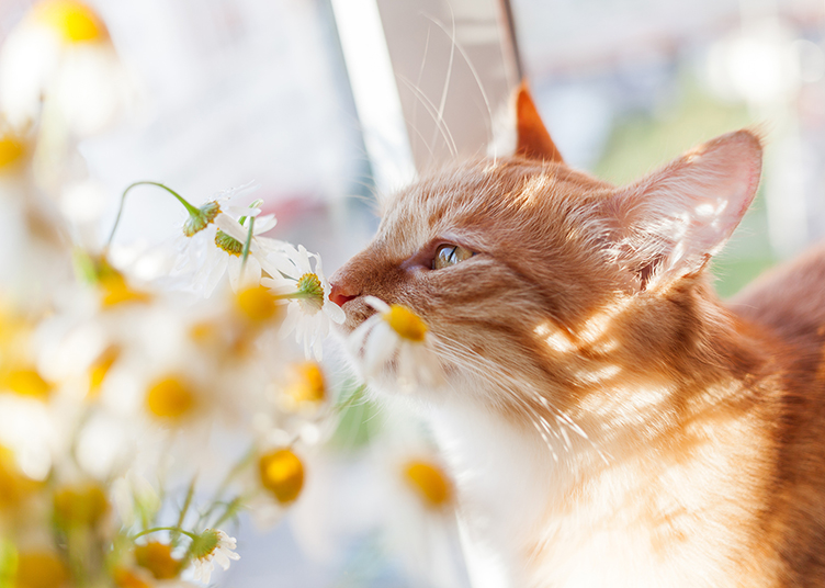 cat with flowers in a home