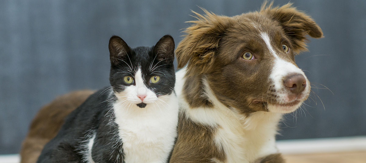 Dog and cat covered by pet insurance