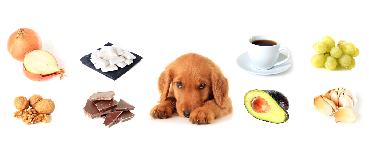 Toxic Foods and Medicines for Pets