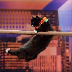 Cat Doing Tricks
