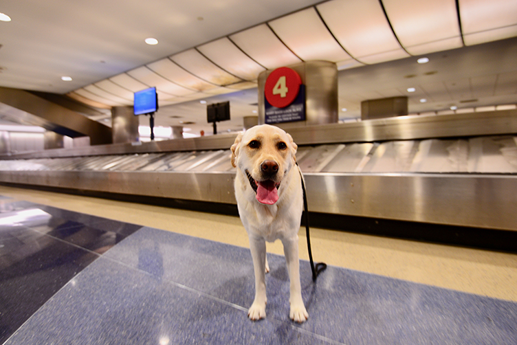 United_Airlines_New_Pet_Policy_PetSafe