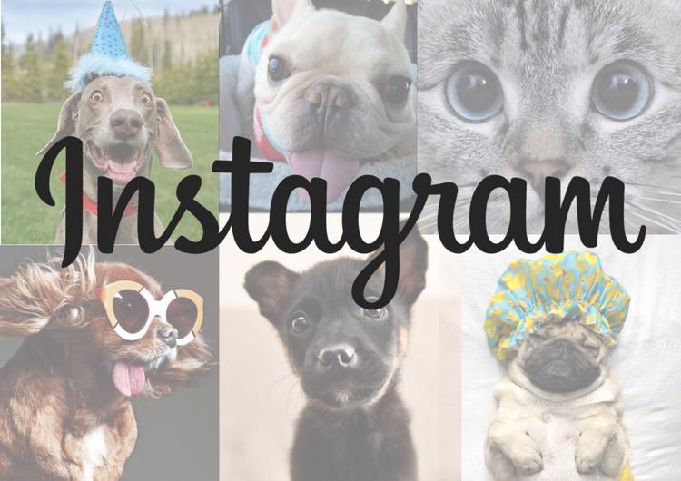 Instagram_Pets