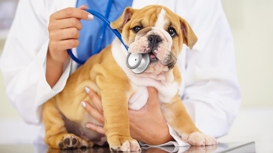 Puppy_Vaccine